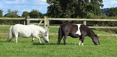 Horses and Ponies for Homing